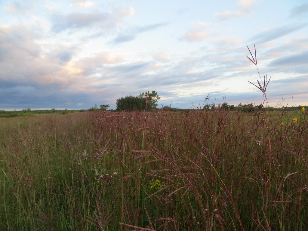 tall-grass prairie